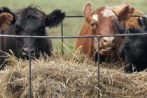 Μέτρα για την οζώδη στην Περιφέρεια Αν. Μακεδονίας – Θράκης