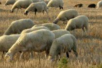 Εγκρίθηκε στην Ε.Ε. ο νέος ορισμός για τα μόνιμα βοσκοτόπια